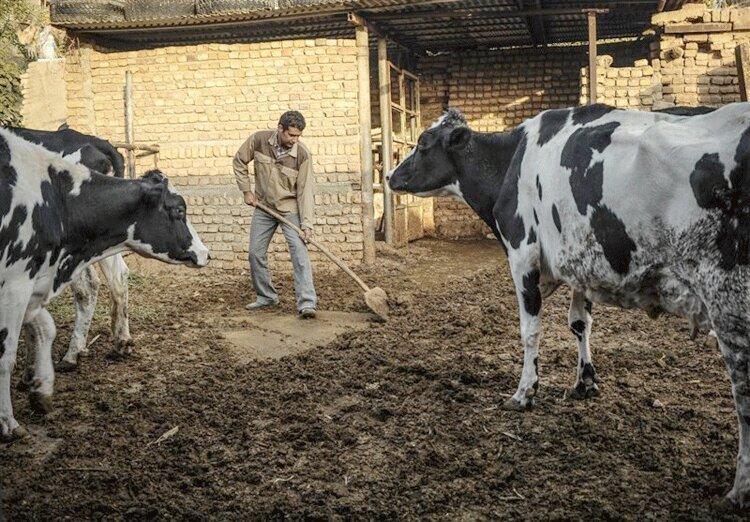 سودآوری کم دامداری های سنتی در استان