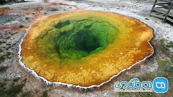حوضچه نیلوفر، پدیده ای شگفت در آمریکا