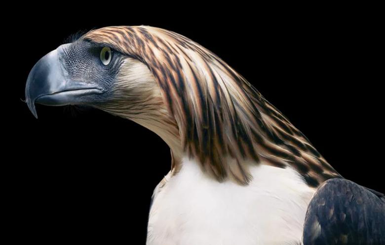 عکس های نادر و زیبا از پرندگان که حالتی شبیه پرتره های انسانی دارند