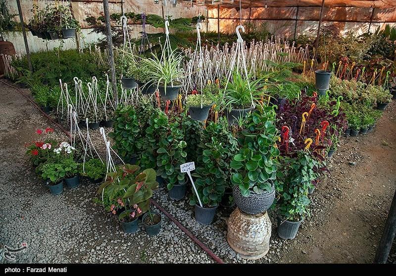 15 گیاه برای تصفیه هوای خانه، آپارتمان و اداره