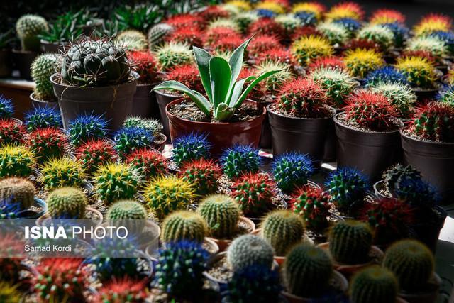 12 نکته برای نگهداری از گل و گیاه آپارتمانی
