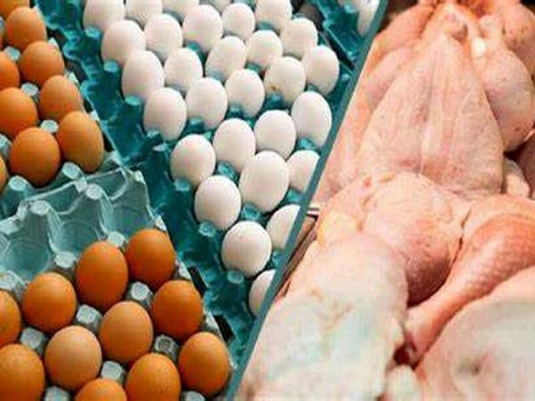 خبرنگاران قیمت مرغ و تخم مرغ در خراسان رضوی رو به کاهش است