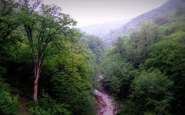 ماجرای واگذاری بخش دیگری از جنگل های هیرکانی چه بود؟